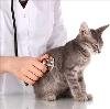 Ветеринарные клиники в Кабанске